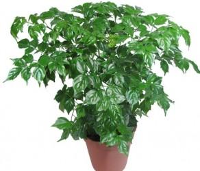 Растение 4