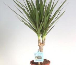Растение 6