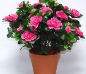 Растение 9