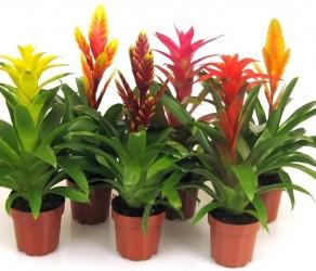 Растение 10