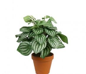 Растение 12