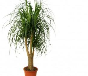 Растение 15