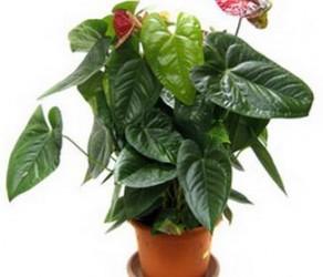 Растение 16