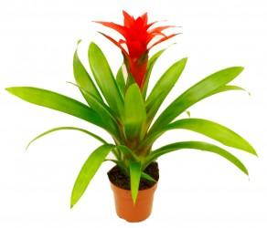 Растение 19