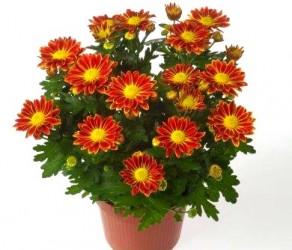 Растение 20
