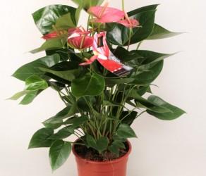 Растение 23