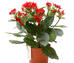 Растение 24