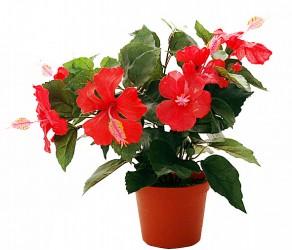 Растение 25