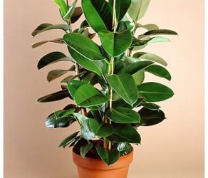 Растение 27