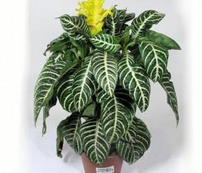 Растение 28