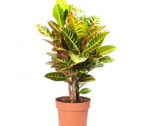 Растение 29