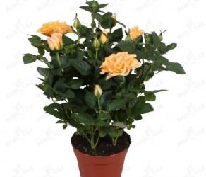 Растение 30