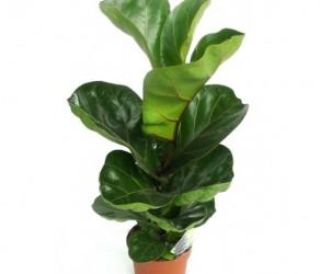 Растение 31
