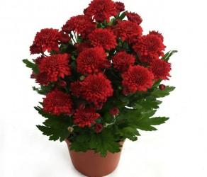 Растение 32