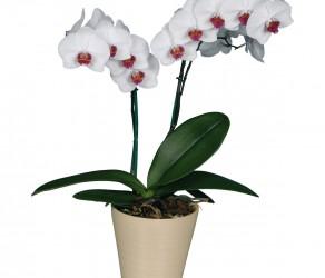 Растение 35