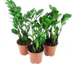 Растение 37
