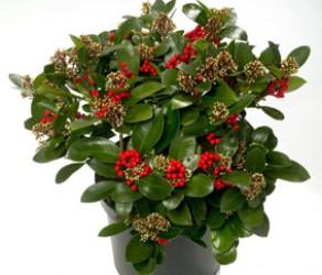 Растение 38