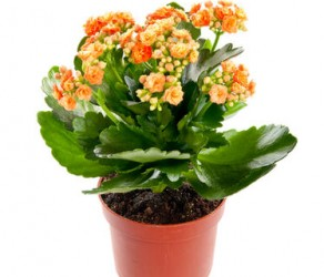 Растение 39
