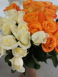 Роза 6
