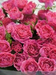 Роза 14