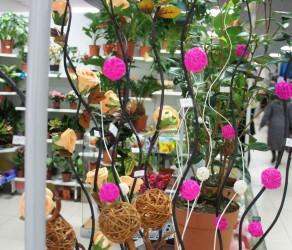 Растение 1